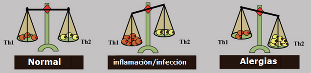 Equilibrio Th1:Th2