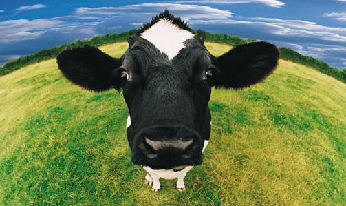Resultado de imagen de lácteos y controversias